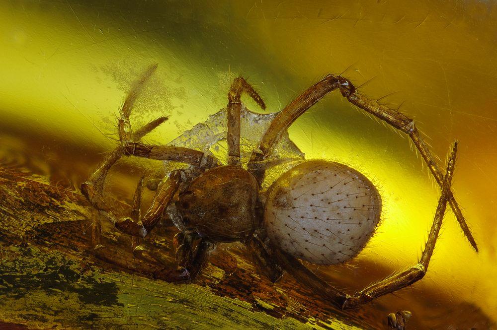 Berstein Inkluse Spinne, baltisch