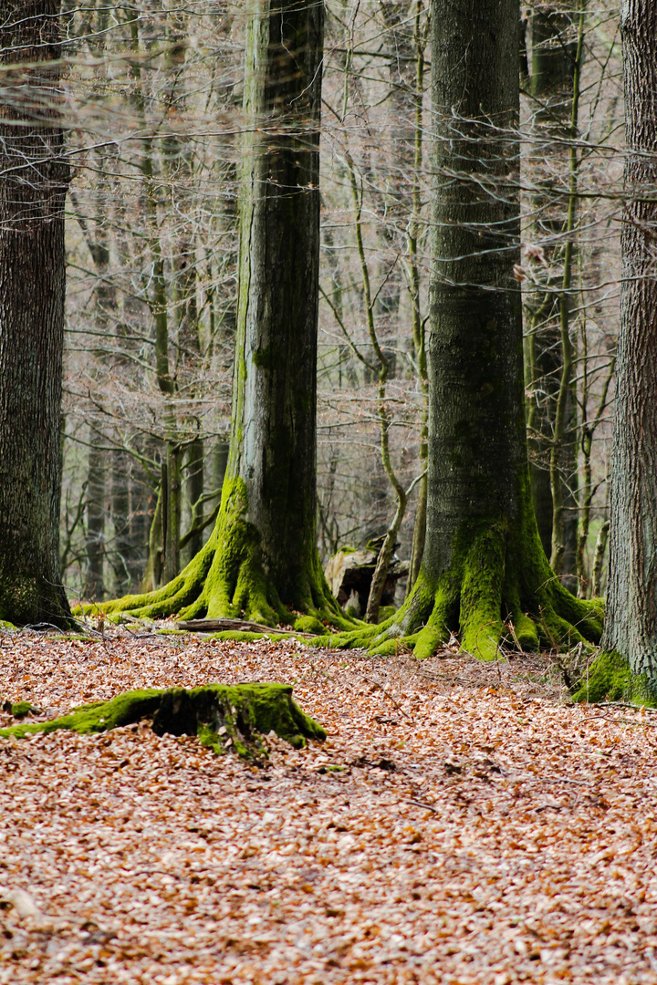 Beruhigender Wald