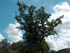 Beschnittener geheimnissvoller Baum