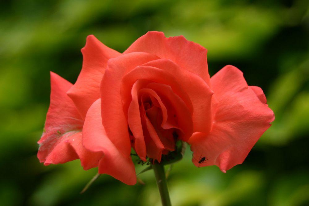 besondere Blütenform
