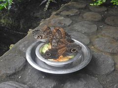 Besondere Schmetterlinge