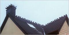 Besser eine Taube auf dem Dach ...
