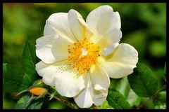 - Bessy Rose -