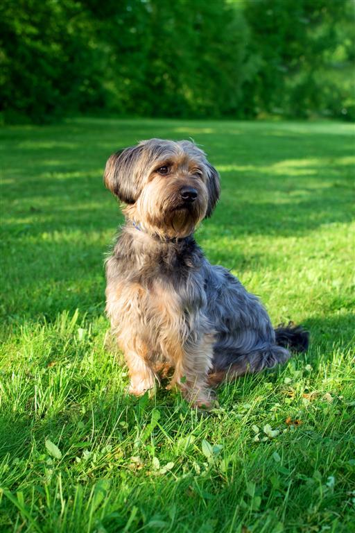 Bester Hund der Welt. :)
