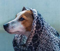 Bestes Hundewetter!