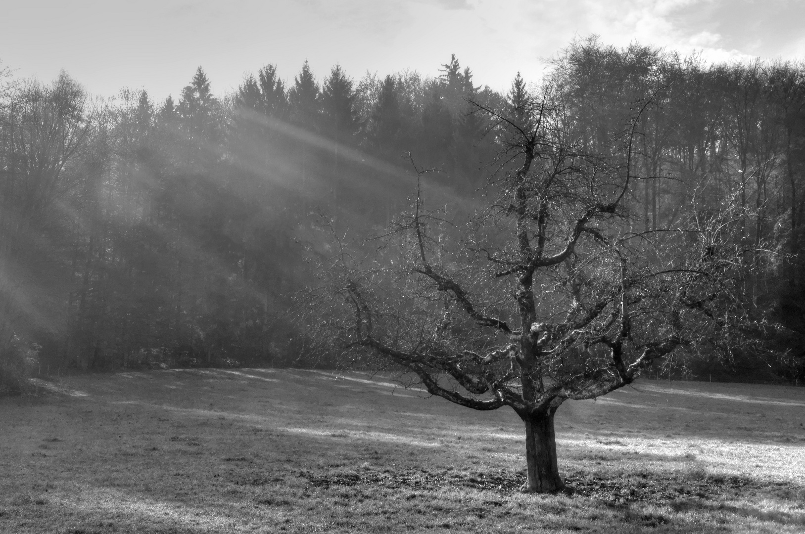 bestrahlter Baum im Spätherbst