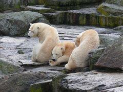 Besuch bei Knut  (Zoo Berlin)