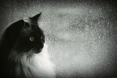 Besuch der Regengespenster