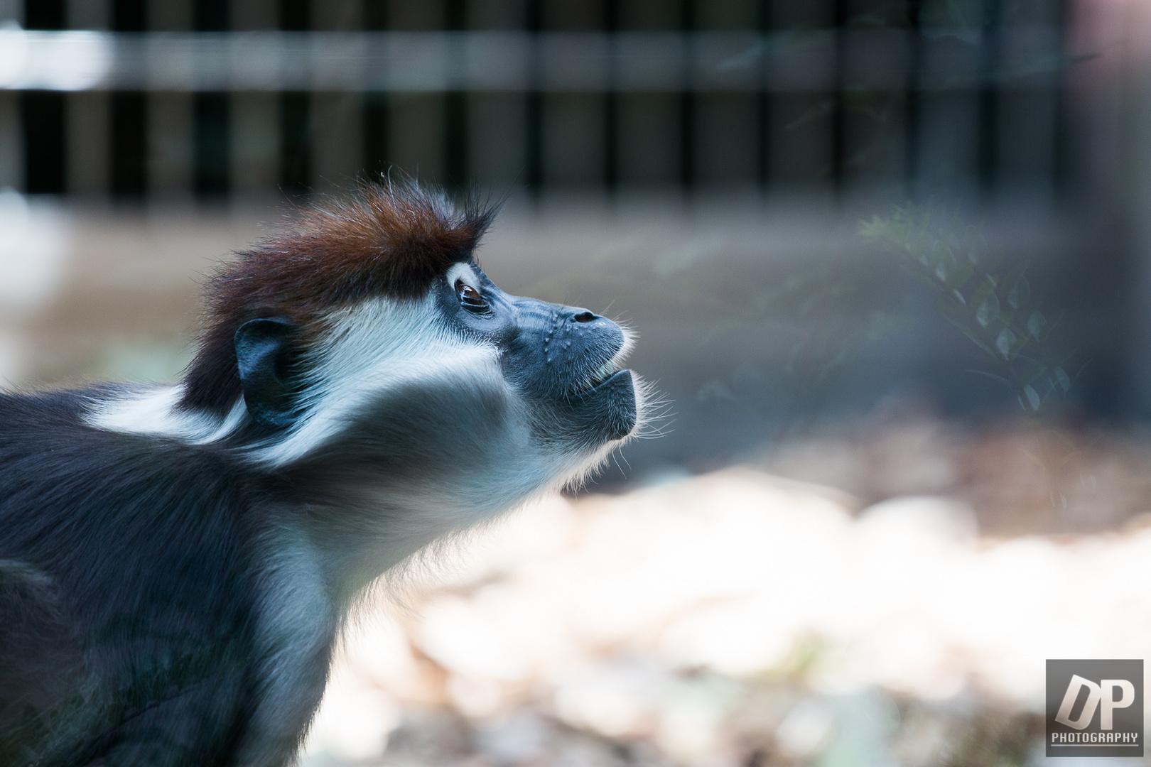 Besuch im Affenhaus