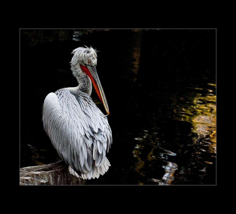 Besuch im Zoo von Mulhouse (2)