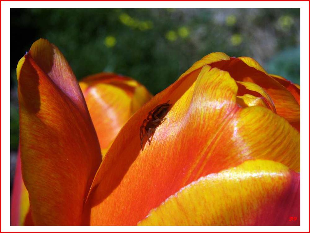 Besuch in der Tulpe