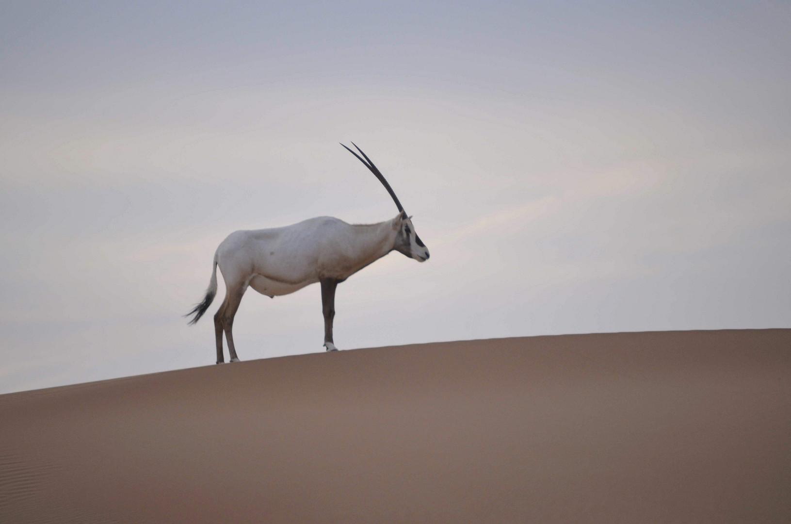 Besuch in Dubais Wüste