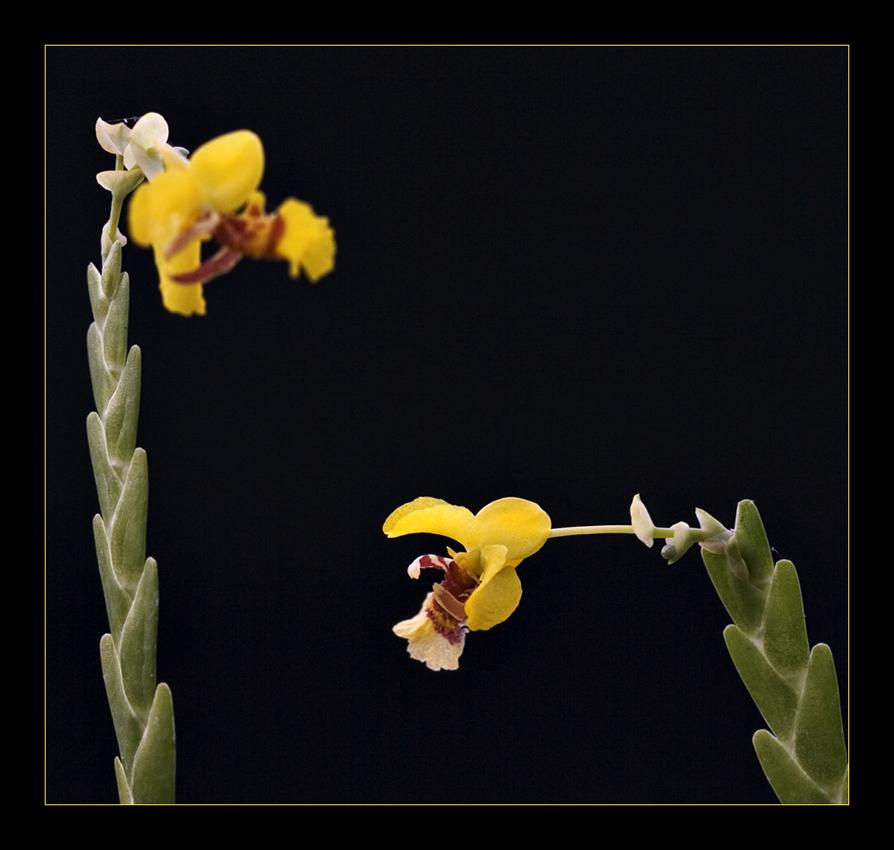 Besuch in einer Orchideengärtnerei (11)