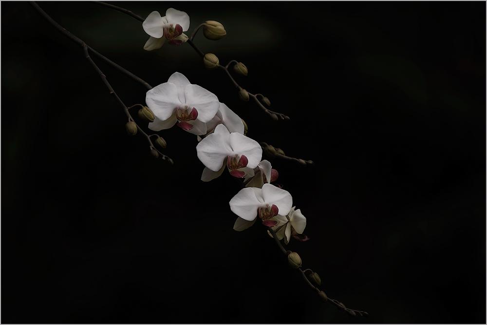 Besuch in einer Orchideengärtnerei (24)