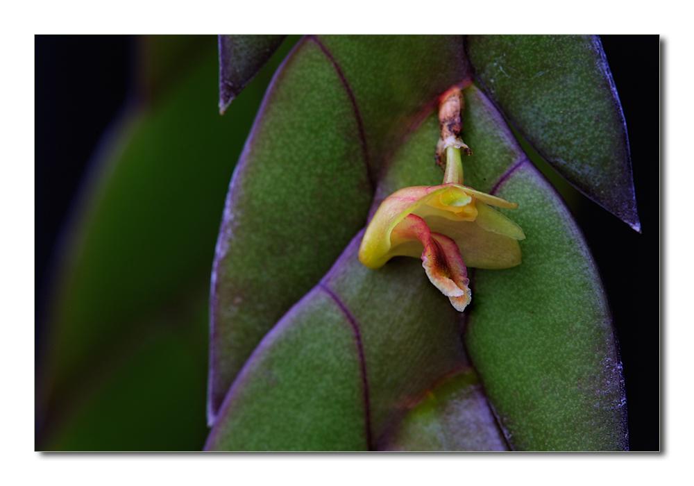 Besuch in einer Orchideengärtnerei (35)