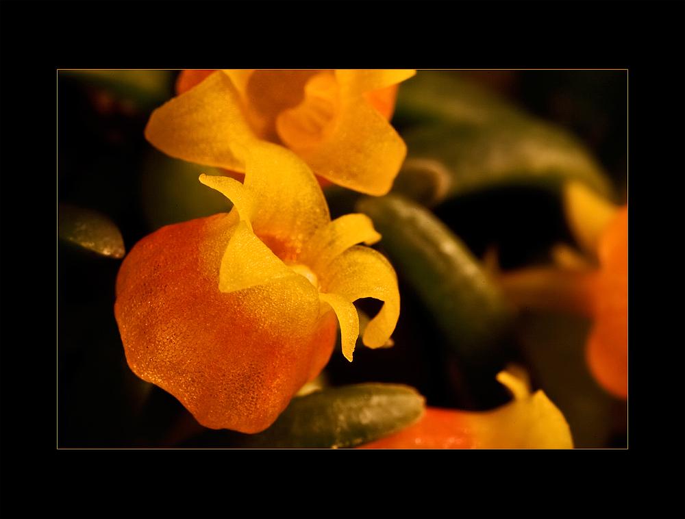 Besuch in einer Orchideengärtnerei (48)