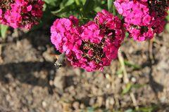 Besuch in meinem Blumenbeet