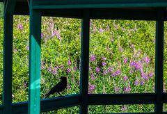 Besucher im Garten                  DSC_3765