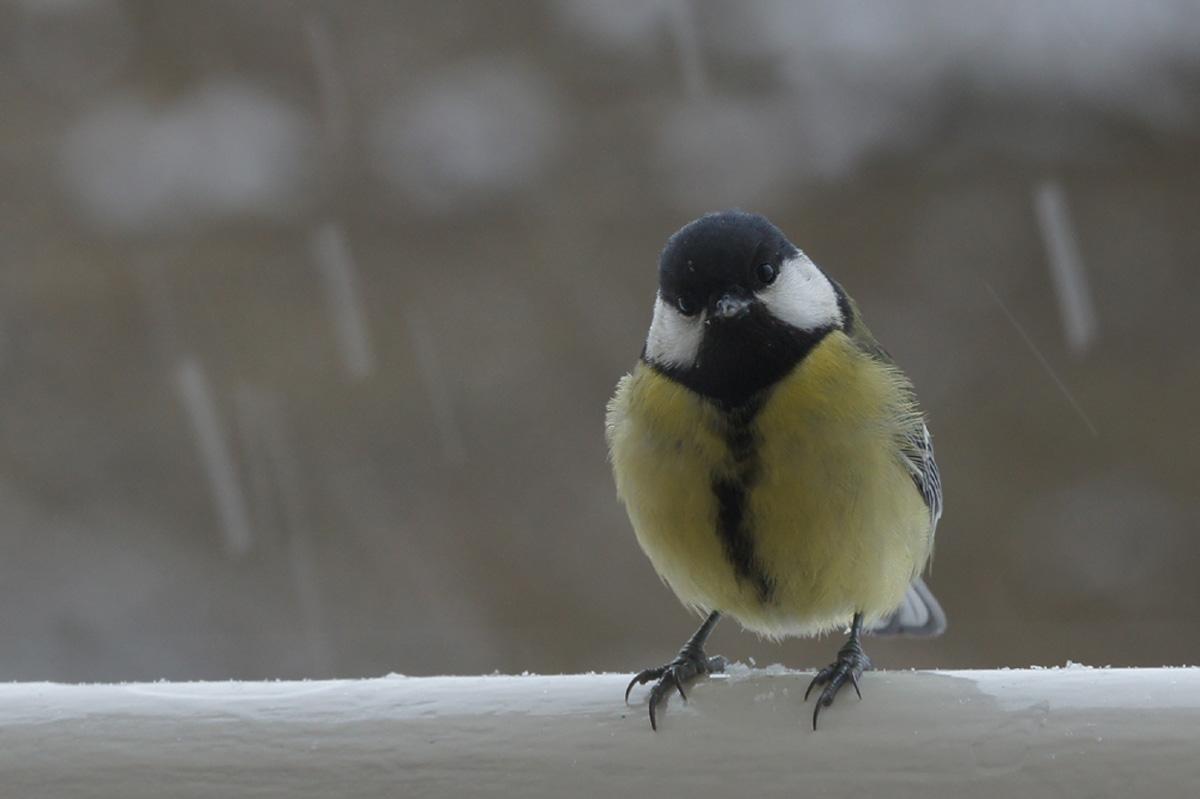Besucher in kalte Zeiten.-Visitors in cold times.