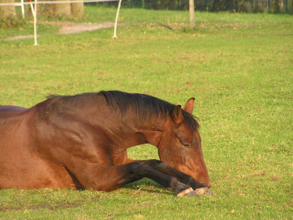 betendes Pferdchen