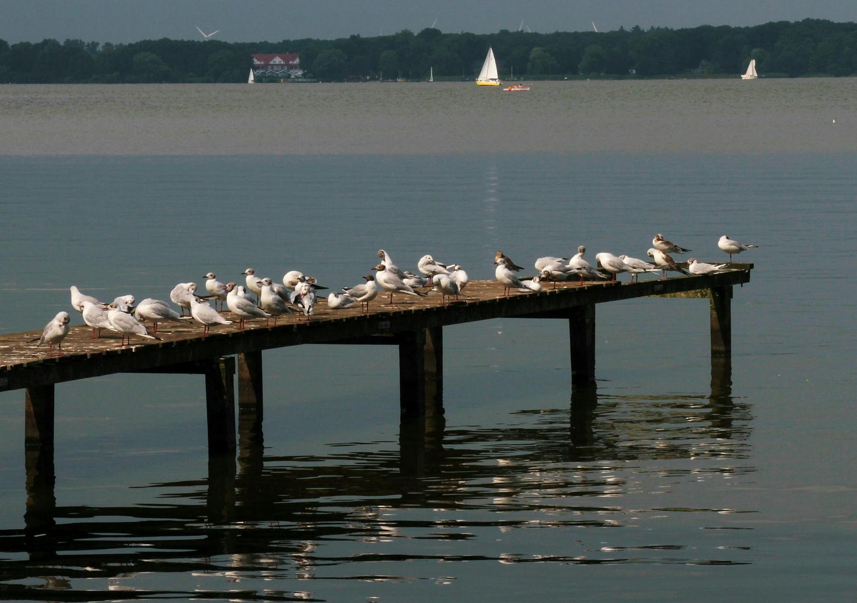 Betriebsversammlung am Meer