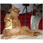 Betrunkener Kater