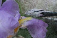 Bett und Blüte