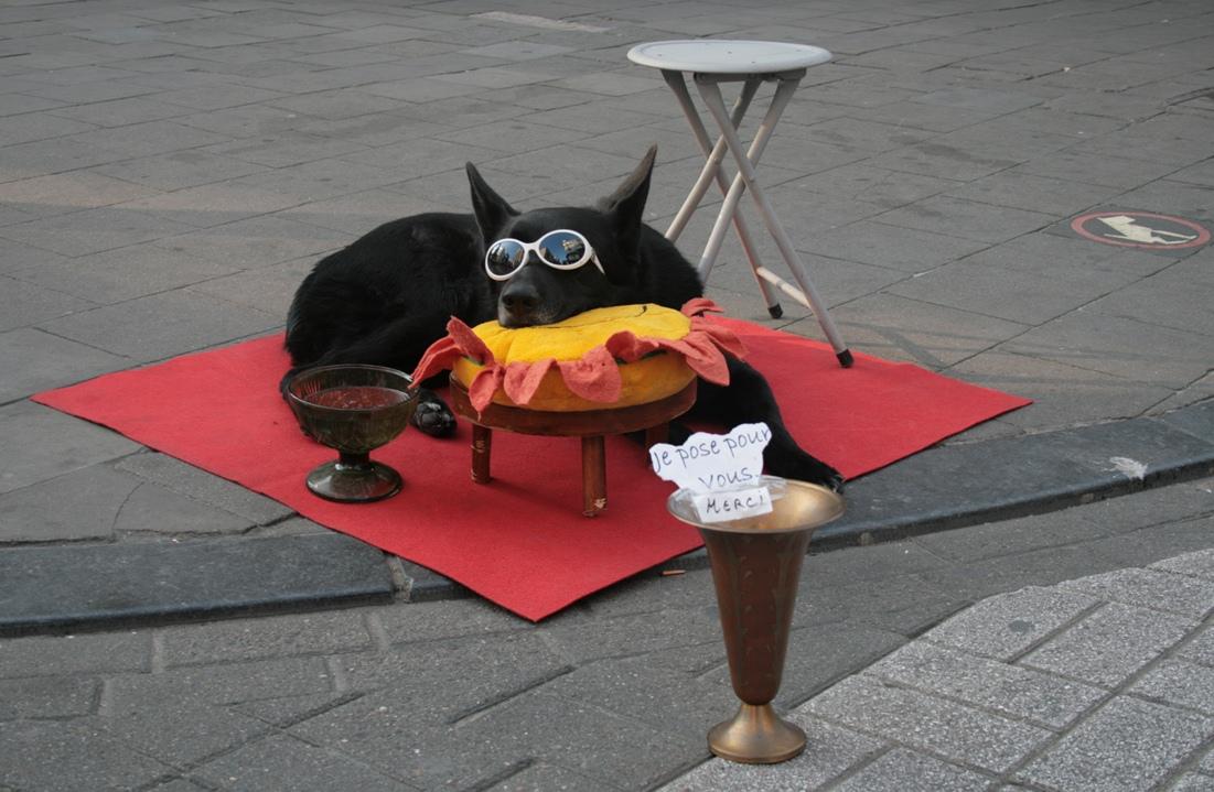Bettelnder Hund in Brüssel