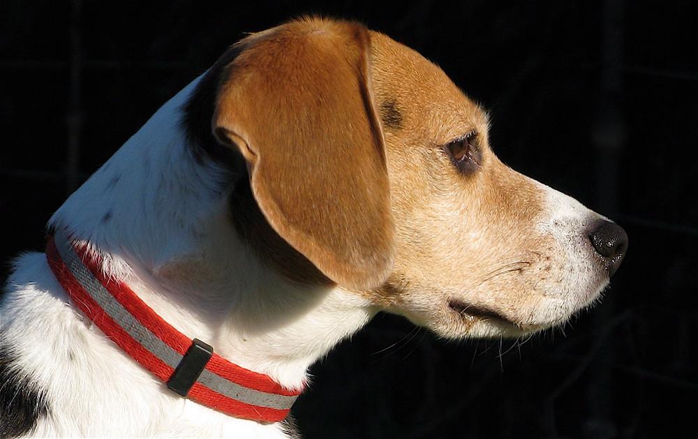 Betty , schönste Hundedame Sülldorfs