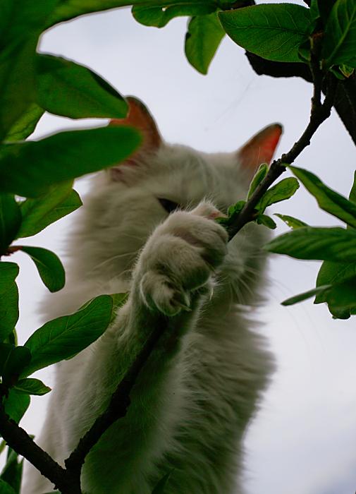 between branches