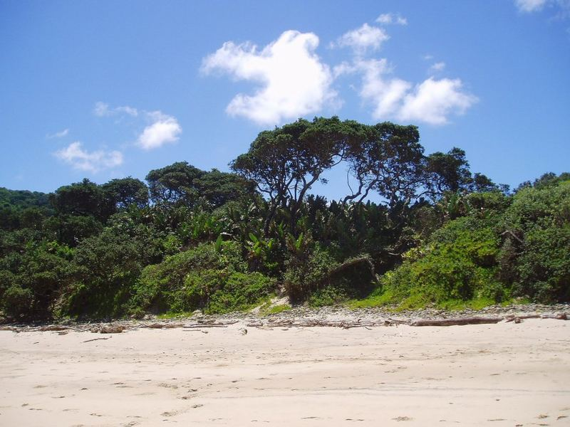 Between Palm Ocean And Indian Ocean