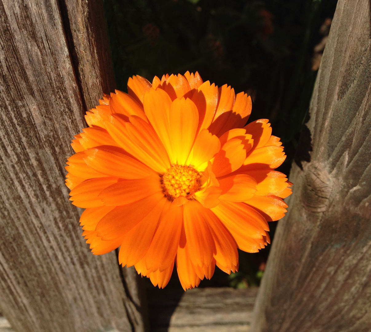 Between the picket fence