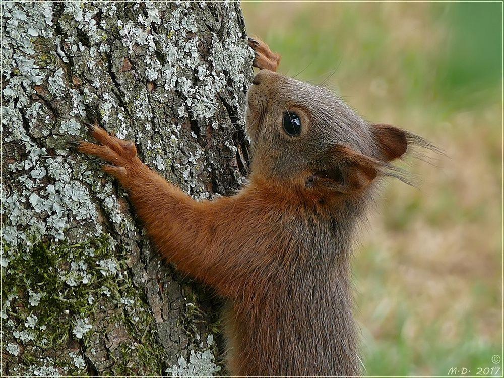 Bevor das Hörnchen verschwand...