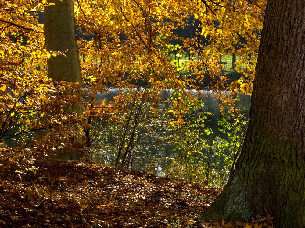 Bevor der Wald sein Prachtkleid ablegt ...
