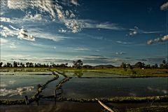 Bewässertes Reisfeld