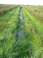 Bewässerung...