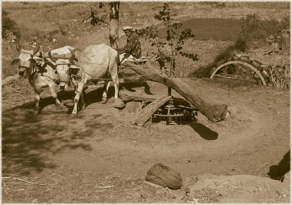 Bewässerung mono