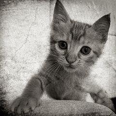 BEWARE OF.....CAT....