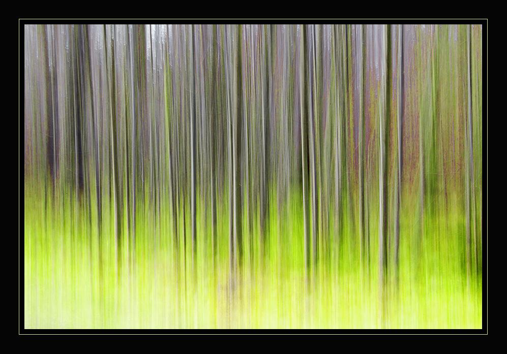 Bewegter Wald 2