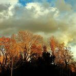 Bewegtes Wolkenspiel über dem Park