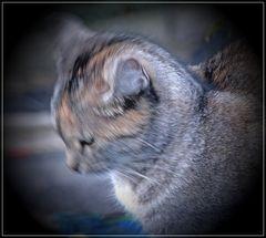 Bewegung  einer Katze