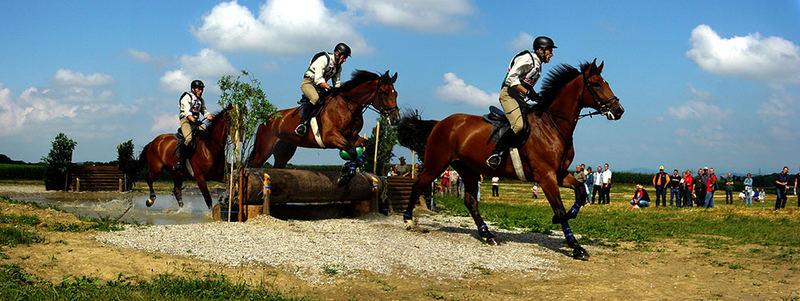 Bewegungsstudie am Pferdesprung