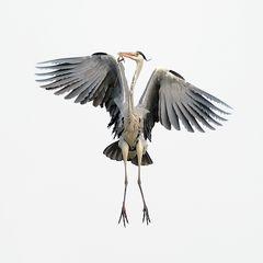 Bewerbungsfoto für einen neuen Bundesadler