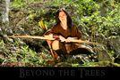 Beyond the Trees von Matt B.