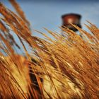 Beyond the Wheat
