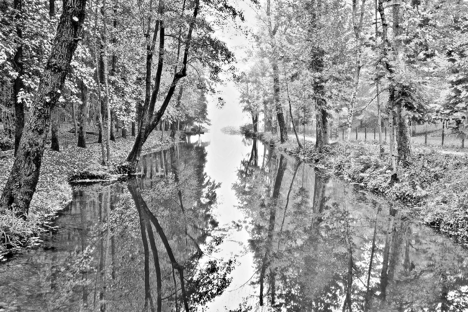 Bianco e nero d 39 autunno foto immagini paesaggi for Foto hd bianco e nero