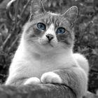 Bianco Nero e Blu