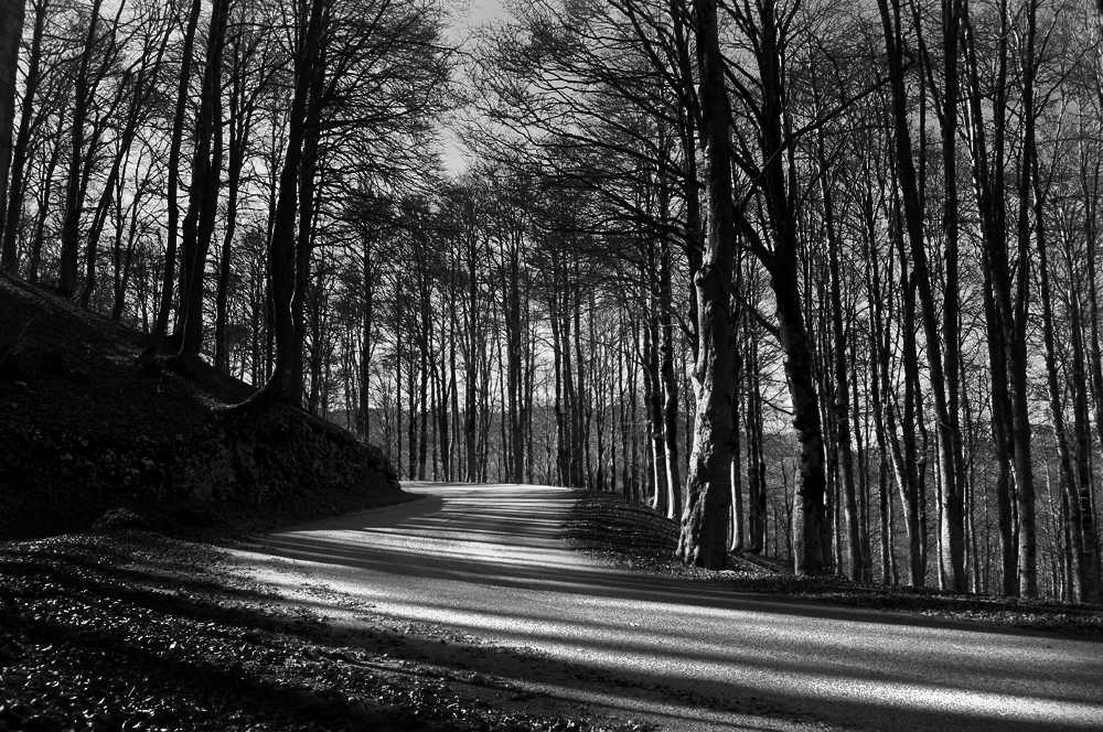 Bianco nero e luce foto immagini paesaggi boschi for Disegni bianco e nero paesaggi
