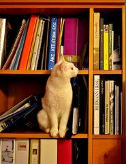 bibliothekskatze