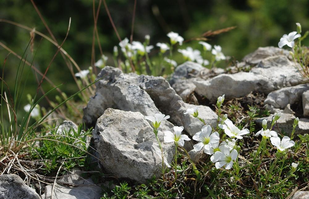 Biela skala- West Tatra